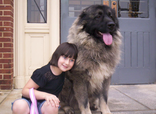 Caucasian Ovcharka Russian Bear Hunting Dog
