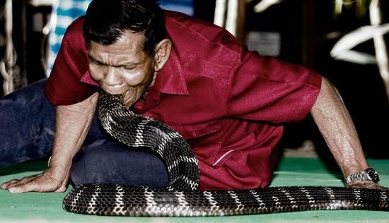 Visit King Cobra Village, Thailand Today  weirdtwist
